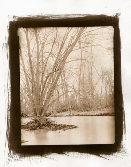 Vandyke Brown Printing Basics   Film Photography Project   Alternative photo process   Scoop.it