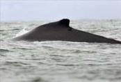 Un estudio revela que el cambio climático reduce el hábitat en el Pacífico canadiense | Agua | Scoop.it