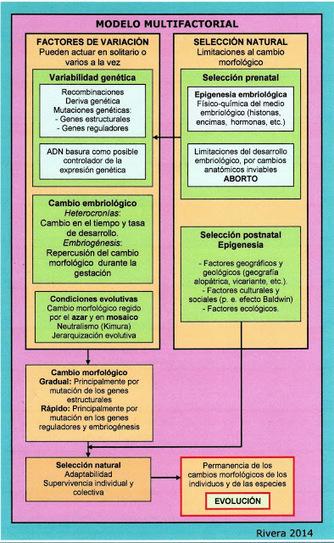 La nueva Ilustración Evolucionista / The new Evolutionary Enlightenment: Embriología y Evolución: breve historia de un desencuentro científico | Religiones. Una visión crítica | Scoop.it