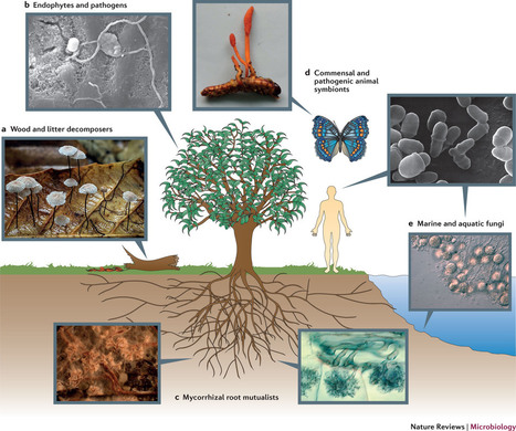 Dimensions of biodiversity in the Earth mycobiome | How microbes emerge | Scoop.it