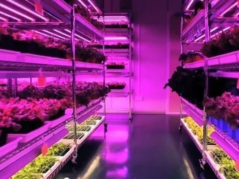 From clean rooms to grow rooms: High-tech companies cultivate indoor farms | Vertical Farm - Food Factory | Scoop.it
