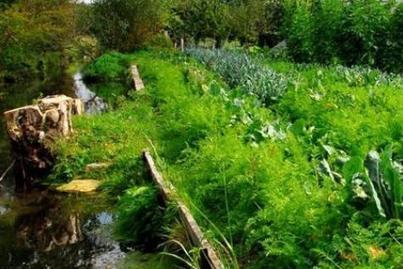 La permaculture, une agriculture rentable? | Revue de presse agricole de la FUGEA | Scoop.it