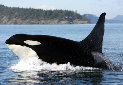 A Deadly Mix: Whales and Sonar | EcoWatch | Scoop.it