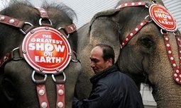 'The end of an era': Ringling Bros circus closes curtain on elephant shows | Thinking Outside the Box | Scoop.it