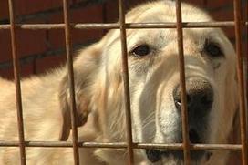 En primavera aumenta el número de mascotas abandonadas | reflexion | Scoop.it