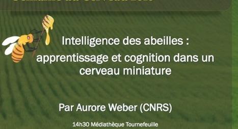 L'intelligence des abeilles : apprentissage et cognition dans un cerveau miniature (Aurore Weber)   EntomoScience   Scoop.it