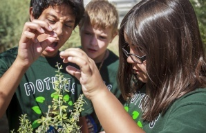 Standards would immerse Arizona students in science | Secondary Science Scoop | Scoop.it