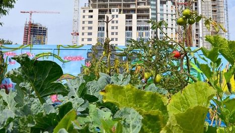Cinq balades dans les jardins urbains: ARTE+7 | Oasis urbaines | actions de concertation citoyenne | Scoop.it