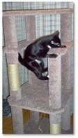 Shelly's Super Spiffy Stuff : Free Cat Tree Plans | Pets And Animals | Scoop.it