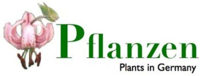 (DE) - Pflanzen, Pflanzenphotos, Pflanzenbilder | Institut für Wirtschaftsökologie | Glossarissimo! | Scoop.it