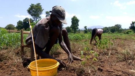 Haiti's peanut producers oppose 500-tonne US donation   Glopol Dev   Scoop.it