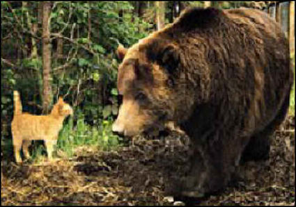 Cute Kittens Terrify Grizzly - News - Bubblews | Weird News and Celebrity Gossip by Tom Rose | Scoop.it