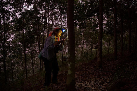 China's High Hopes for Growing Those Rubber Tree Plants - Global Rubber Markets | Sustain Our Earth | Scoop.it