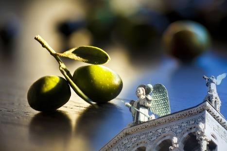 Lucca sarà per due giorni capitale dell'olio extra vergine di oliva di qualità - TeatroNaturale.It   Living In Italy   Scoop.it