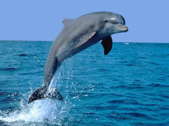 11 Facts About Dolphin Hunts - Interesting Facts You Should Know   Every Thing Around the World   Scoop.it