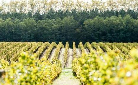 La France, deuxième vignoble bio de l'Union européenne - 20minutes.fr | Vins nature, Vin de plaisir | Scoop.it