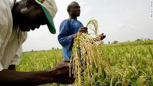 How Africa could feed the world | Thinking Geographically | Scoop.it