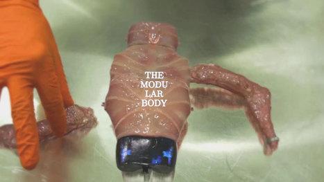 The Modular Body - online science fiction story by Floris Kaayk // #mediaart #robotics   Digital #MediaArt(s) Numérique(s)   Scoop.it
