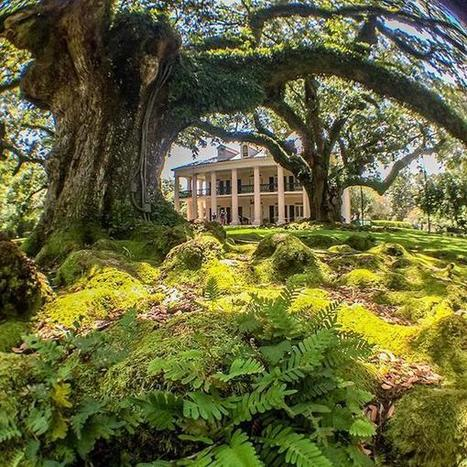 Kelly on Twitter | Oak Alley Plantation: Things to see! | Scoop.it