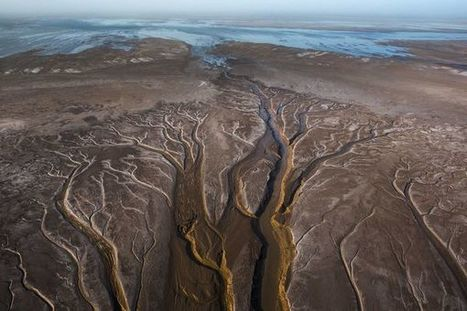 Saving the Colorado River Delta, One Habitat at a Time | Nature enviroment and life. | Scoop.it