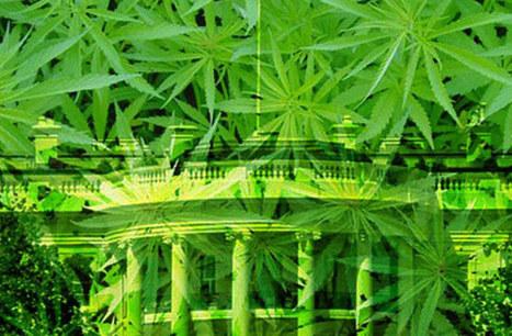 5 White House Weed Lies | Marijuana Laws | Scoop.it