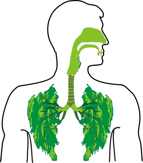 The 9 Best #Herbs for Lung Cleansing and Respiratory Support | Limitless learning Universe | Scoop.it