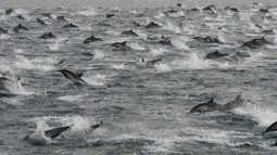 La fortuna de que 100.000 delfines decidan acompañar a tu barco   laAldeaGlobal.com   Tecnológicos   Scoop.it