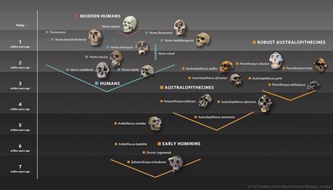 El árbol de la filogenia humana | HISTORIA Y GEOGRAFÍA VIVAS | Scoop.it