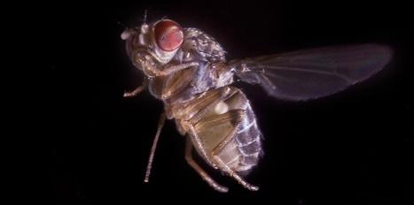 Pourquoi est-il si difficile d'attraper une mouche ?   Inter Nettoyage Service Bretagne   Scoop.it