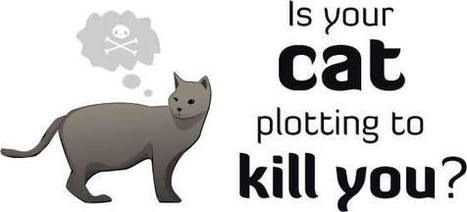 Is your cat plotting to kill you? Quiz - HeyQuiz.com | Cats Can Kil | Scoop.it
