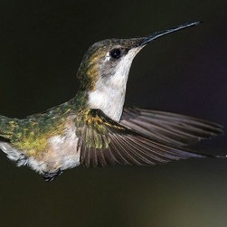 "What Google ""Hummingbird"" Does and Which Sites It Affects [INFOGRAPHIC 