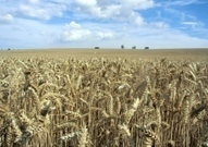 BBSRC/JIC mentions: Farming feature: Could East Anglia lead way in 'agri-tech' farm technology revolution? | BIOSCIENCE NEWS | Scoop.it