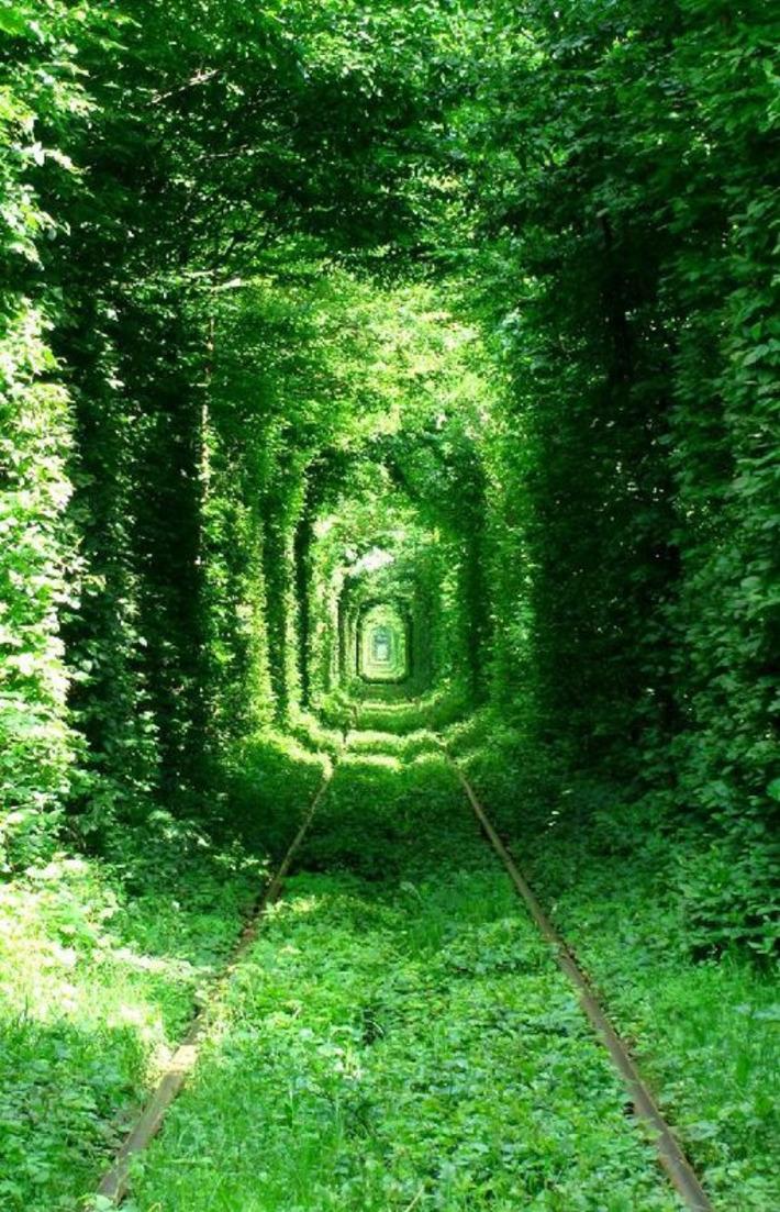 Magiques : les 21 plus belles forêts du monde | Bois, forêt, construction, bois énergie, ameublement et plus | Scoop.it