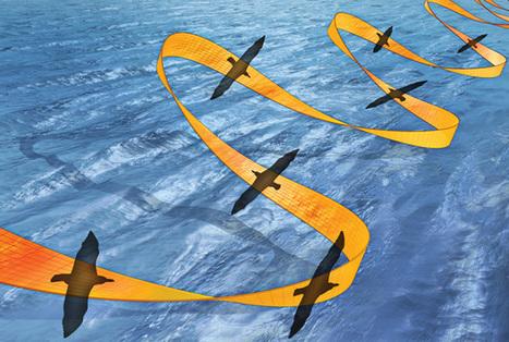 The Nearly Effortless Flight of the Albatross | Biomimicry | Scoop.it