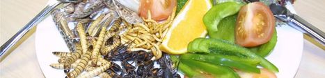 What's on - Edible insects! - World Museum, Liverpool museums | Entomophagy: Edible Insects and the Future of Food | Scoop.it