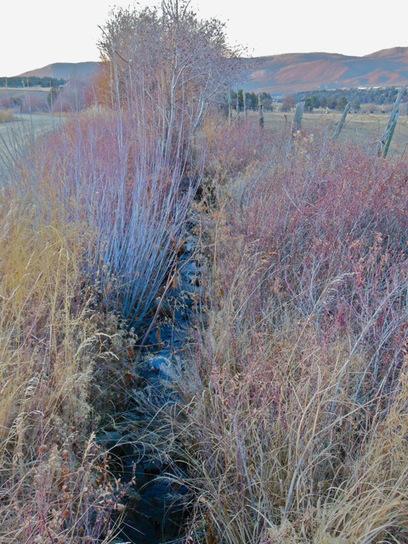 Acequia de San Juan Nepomoseno del Llano | Cindy Stapper | Acequia | Scoop.it