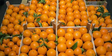 Dix millions de tonnes de nourriture sont gaspillées tous les ans en France | Territoires durables | Scoop.it