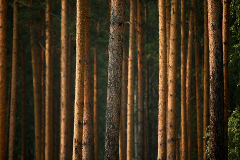 Harvard Exits Romanian Timber Woes, Selling Forests to Ikea | Timberland Investment | Scoop.it