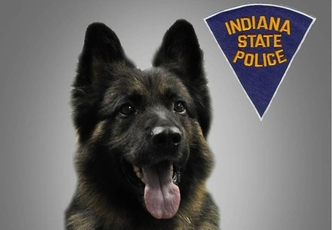 Ind. Deputy Wounded, K-9 Killed In Standoff | Law Enforcement | Scoop.it