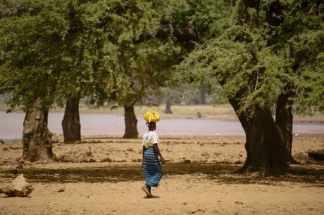 Landscapes approach could alleviate West Africa climate change woes - AlertNet | CGIAR Climate in the News | Scoop.it