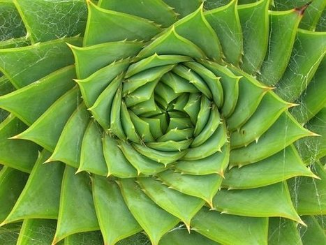 Energy, Maths, Physics & Numbers: Understanding The Fibonacci Sequence And Golden Ratio | Energy Health | Scoop.it