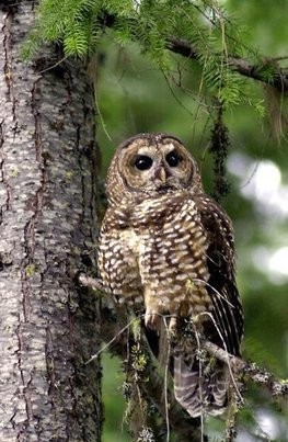 COMBS: Preserving endangered species the Texas way - Washington Times   birding   Scoop.it