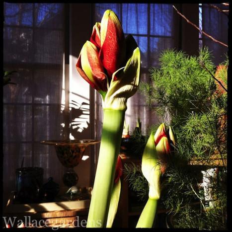 #gardenchat: #GardenWalk Thursday On Friday: @gardeninbetween & @SassyNancy   Grown Green Gardens   Scoop.it
