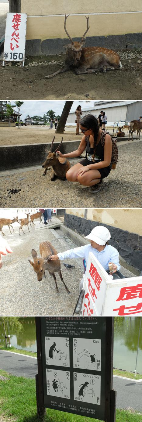 Notre voyage au Japon : Arashiyama et Nara (des singes et des daims…)   Anais et Pedro   Voyager au japon   Scoop.it