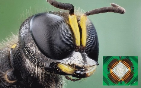 Insect-Eye Camera Offers Wide-Angle Vision for Tiny Drones | Biomimicry | Scoop.it