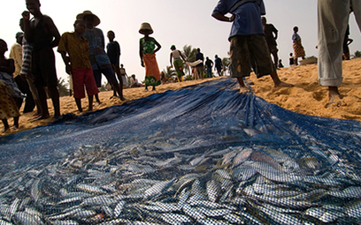 Ghana News - African Fisheries Ministers meet in Addis Ababa | NEPAD CAADP Compendium on Agriculture in Africa | Scoop.it