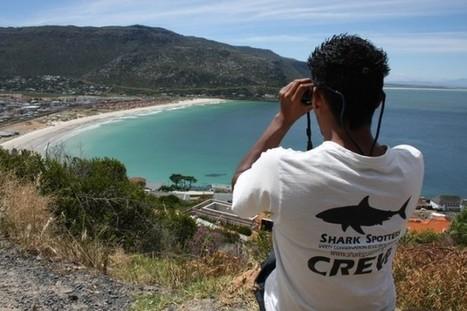 Attaques de Requins: plus de risques à la Nouvelle Lune ? | Protection des Océans | Scoop.it