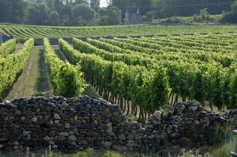 Un été sur la route des vins d'Anjou et Saumur   Tourisme viticole en France   Scoop.it
