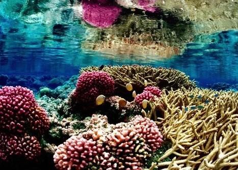 Acidification des océans : les émissions de CO2 mises en cause - L'énergie d'avancer | environnement, | Scoop.it