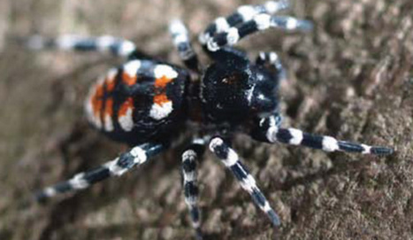 New Genus of Velvet Spider Named after Lou Reed | Biology | Sci-News.com | Biology | Scoop.it